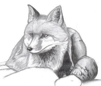 dibujo de zorro sentado